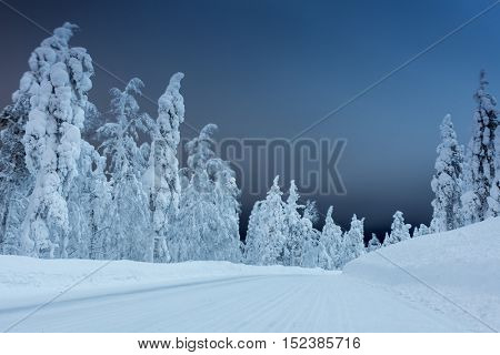 Winter landscape - rural road at dark night time with big trees covered snow, windy weather, long exposure
