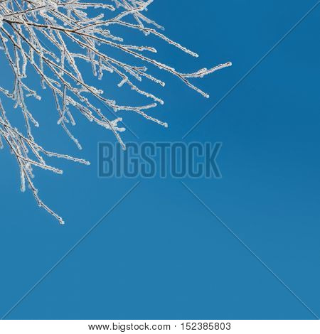 Abstract Winter Background - snow covered icy white branches against blue sky
