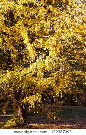 part tree branches with yellow autumn leaves in the background landscape of nature,