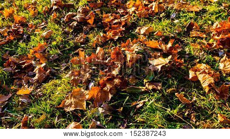 yellow, brown with red leaves lying on the ground in the fall