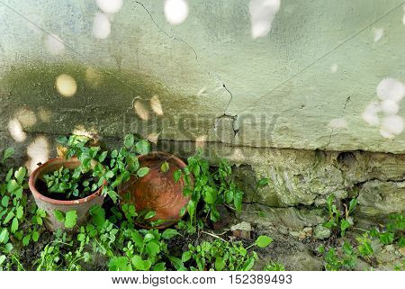 Pots on a grunge concrete wall background. Sunbeams on the wall