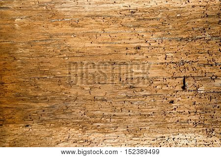 Old wooden boards background full of shipworm holes texture