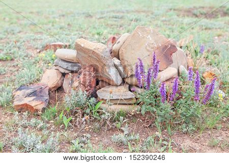 natural composition with violet flowers and stones