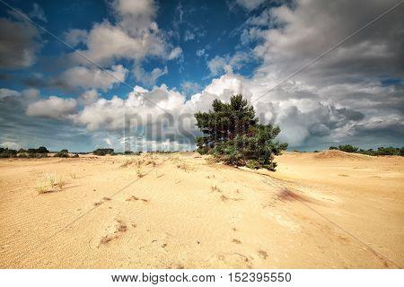 beautiful cloudy sky ove sand dunes and pine tree