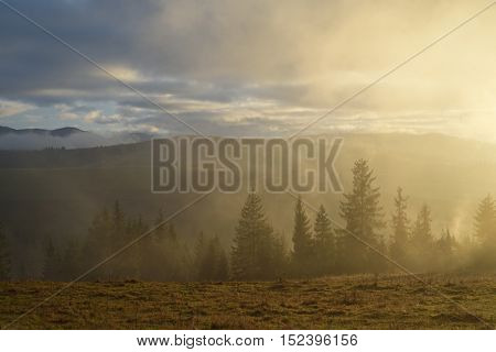 Autumn Landscape with mist and sunshine in the mountains. Fir forest on the slopes. Carpathians, Ukraine, Europe
