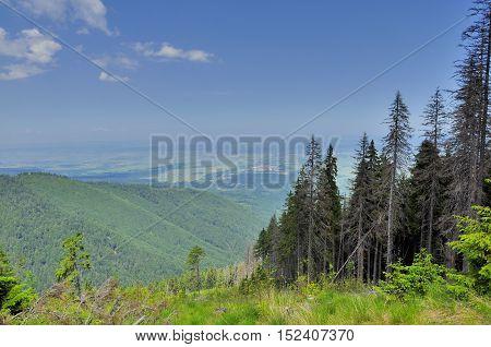 Clearâ cut forestry in Romanian Carpathians mountains