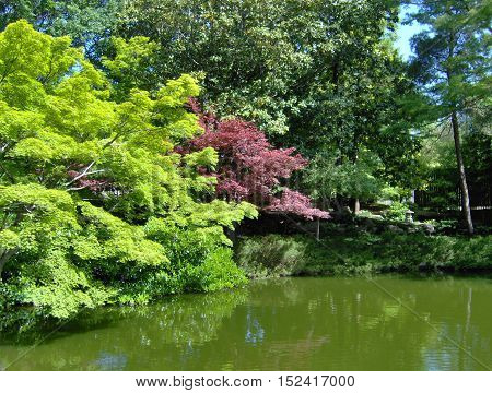 green and red leaf trees with a green pond