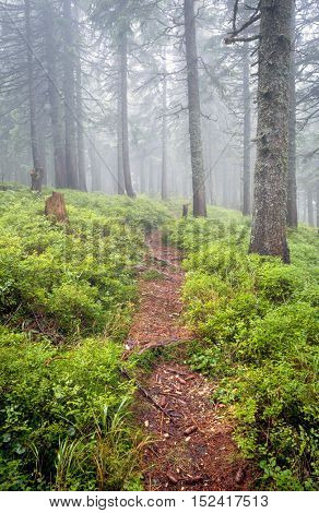 pathway in wet misty forest
