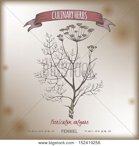 Foeniculum vulgare aka fennel vector color hand drawn sketch on vintage background. Culinary herbs collection. Great for cooking, medical, gardening design.