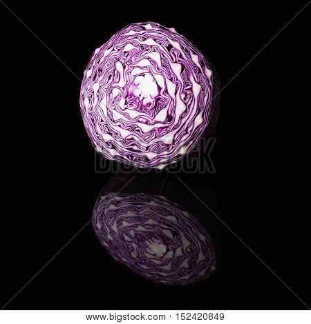 Scotch kale or purple cabbage isolated on a black glossy background with real reflection