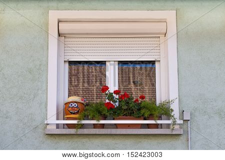Window. Flowers on the window. Face of pumpkin on a windowsill. A window with shutters. The window of a private house