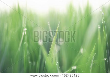 Beautiful nature background good people are: people who can keep environment stay green