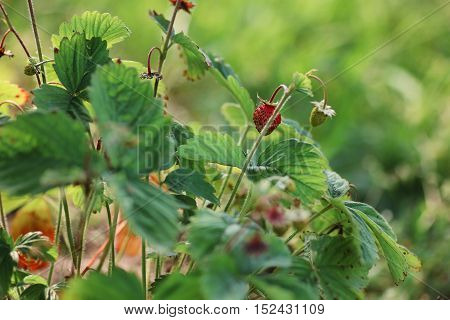 ripe fresh harvest of crops grown in the grounds of environmental in nature