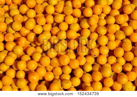 Lots of yellow plum fruit are in bulk, as a backdrop.