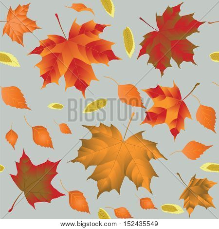 autumn leaves on a light gray background vector illustration seamless pattern