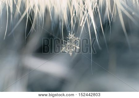 beautiful clear carved snowflake hanging on the fur hairs