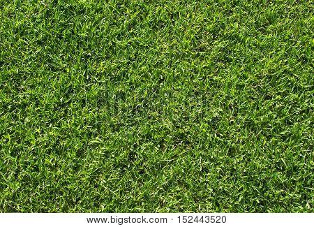 Green grass background, Green grass soccer field, Close-up image of fresh spring green grass.