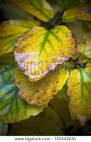 Wet autumn leaf glistening after light shower