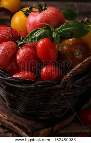 Colorful Tomatoes, Red Tomatoes, Yellow Tomatoes, Orange Tomatoes, Green Tomatoes. Tomatoes Backgrou