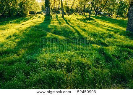 Green grass Scene during sunset. Long beautiful shadows. Nobody