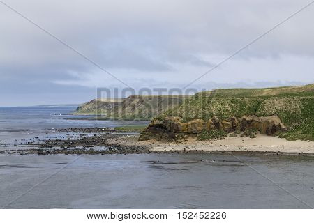 cliff coastline of the island of Bering sunny summer day