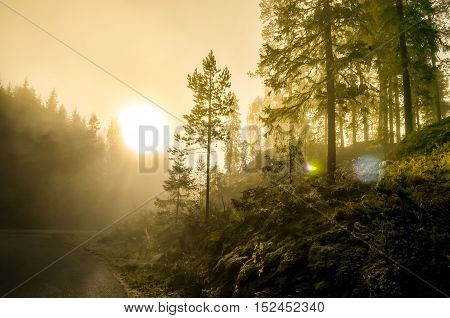 morning fog in norwegian fjord and wood landscape during autumn