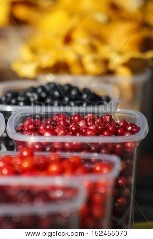 Wild blueberries cranberries and lingonberries plastic boxes