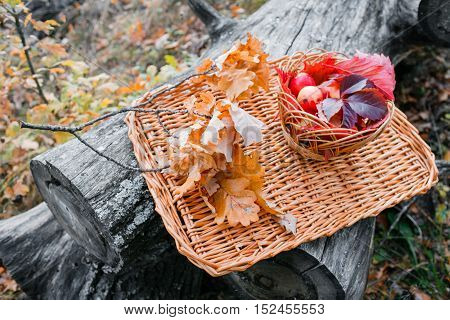 Juicy apples on a wicker tray, surrounded by fallen autumn leaves. Beautiful branch with dry leaves lying around apples. Five beautiful juicy apples.