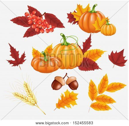 Happy Thanksgiving celebration background. Autumn yellow, orange Pumpkin, Bright leaves, Rowan Berries, acorns. Vector illustration for poster, card, banner or flyer.