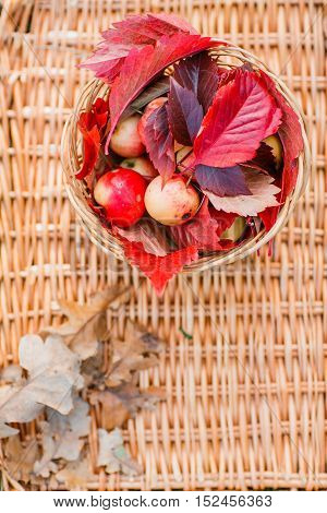 Juicy apples on a wicker tray, surrounded by fallen autumn leaves. Beautiful branch with dry lying around