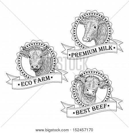 Cow calf bull cute muzzle face set collection variation. Vector beautiful square sign outline black white illustration isolated white background
