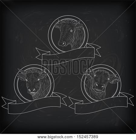 cow calf bull cute muzzle face set collection variation sticker icon label tag badge symbol text space tape. Vector beautiful square nice chalkboard sign outline drawn chalk illustration