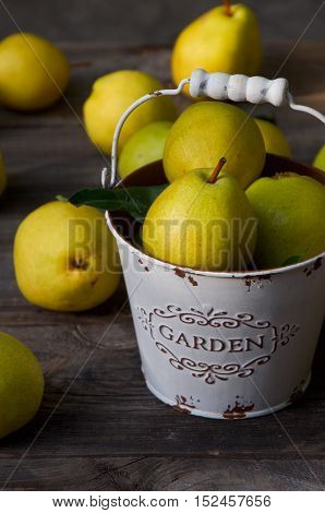 Ripe yellow pears in a metal bucket on a wooden table against the background of scattered pears
