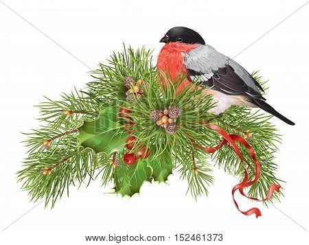 Vector Christmas banner with traditional decoration christmas tree branches and cute bullfinch. Design element for winter sale party invitation or greeting card.