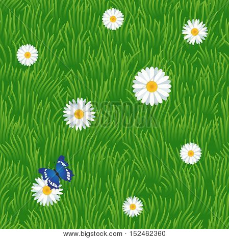 Grass Seamless Pattern With Chamomiles And Butterfly, Vector