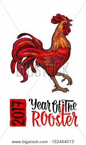Red fiery rooster. Symbol Chinese 2017 new year. Vintage color drawn vector