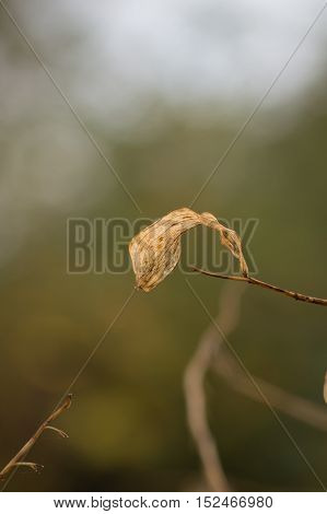 Close up of a fragile plant in the morning