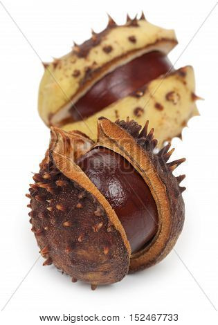 Two Chestnuts With Crust, Isolated On A White Background, Close-up.