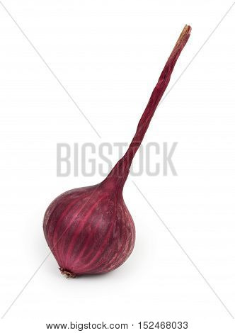Red Onion Isolated On White Background, Close-up.