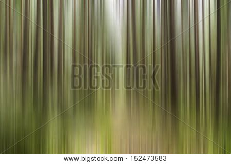 Motion blur effect of sun shining through the trees in a woodland creating smooth lines of nature colors ideal for wallpaper background with copy space