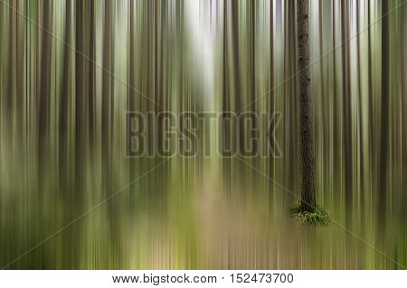 One single tree in focus in a motion blur effect of sun shining through the trees in a woodland creating smooth lines of nature colors ideal for wallpaper background with copy space