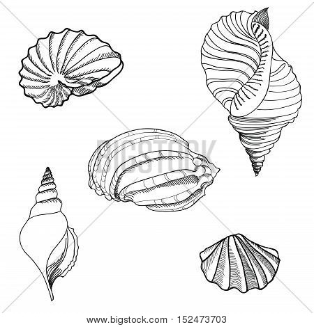 Seashell set. Underwater starfish collection. Sea shell mollusk engraved illustration isolated on white background.