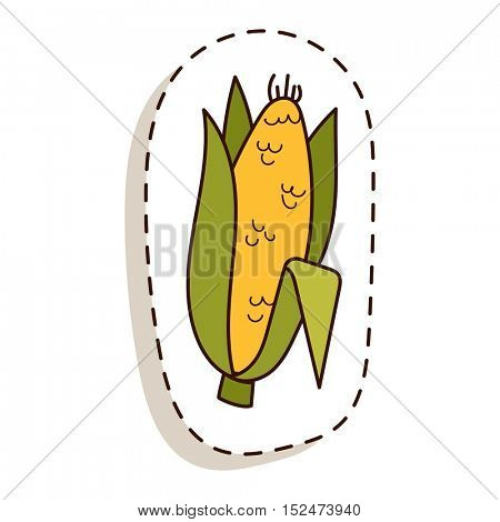 Corn cobs vector illustration.