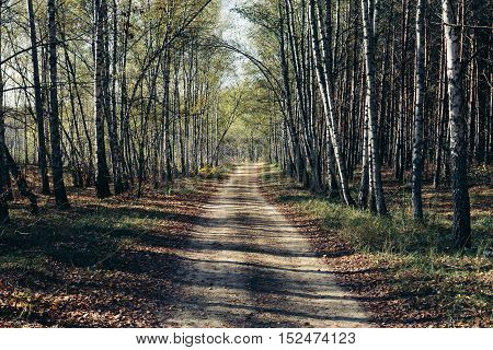 Wild Road in the autumn forest in the daytime