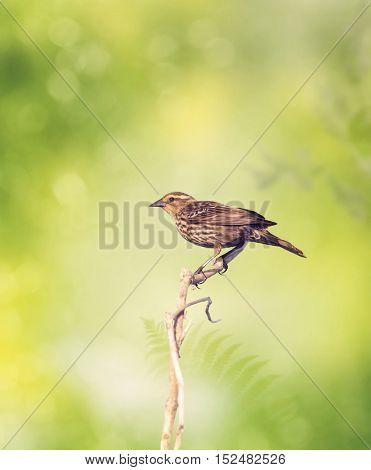 Brown Bird Perches on a Branch