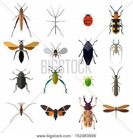 Insect icons set isolated on white. Vector illustration eps 10