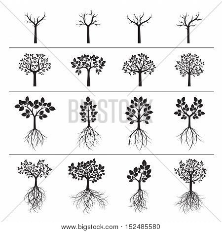 Set of Black Trees and Roots. Vector Illustrations.