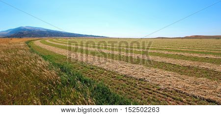 Alfalfa Field that is cut and raked in the Pryor Mountains in Montana US