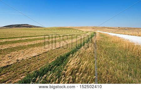Alfalfa Field that is cut and raked in the Pryor Mountains in Montana USA