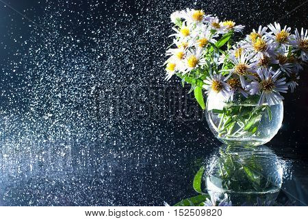 Purple asters in a glass vase with a circular spray of water. Beautiful floral still life with a mirror image on a dark background. Image for printed materials and backgrounds.